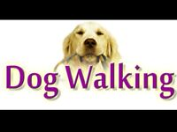 DOG WALKER VACANCY