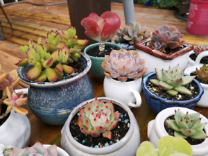 Succulents for sale!!