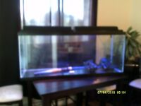 55 gal aquarium & accessories
