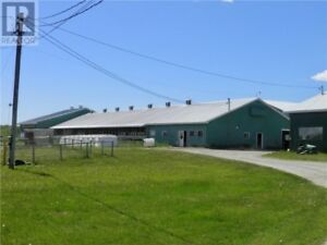 Well maintained Dairy Farm with 6 bedroom house and garage!!