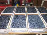 5 pound of locally picked blueberries at 12$