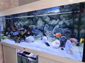 Juwel Aquarium 240 litres