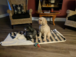Dog walking and boarding in Straffordville / Tillsonburg area