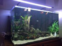 Aqua nano 130 fishtank