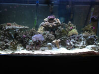90 Gallon Salt Water Aquarium