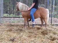 poney femelle vente ou échange