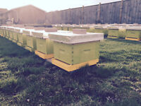 Do you want Honey Bees on your Property?