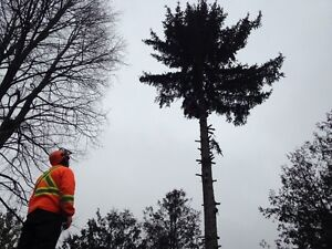Tree services  London Ontario image 1