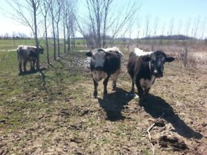 Grass-fed Beef for sale