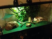 Dragon + tank and accessories for sale