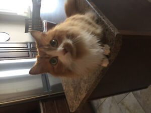Cat looking for a loving home