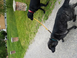 Dog walking and pet sitter