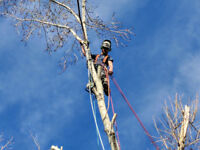 Proffessional Tree Pruning and Removals