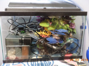 10 Gallon fish tank plus filters and all you need