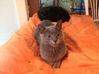 beaux chats noirs à donner