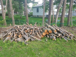Free wood and wood chips