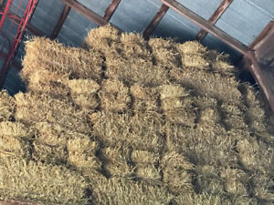 2019 Straw small square bales