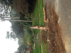 TOP NOTCH TREE SERVICE !!TREE REMOVAL 50% OFF STUMP GRINDING!! London Ontario image 7
