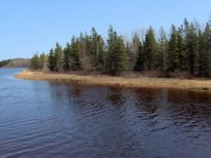 Waterfront Woodlot with small cabin
