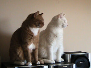 2 Brother cats to give away to good home