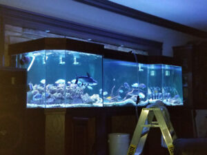 aquarium géant 400gallon et plus