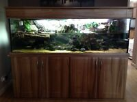 6ft terrapin aquarium fish tank complete set up