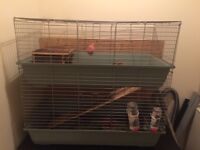 2 x female guinea Pigs with two storey hutch