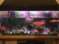 Beautiful Complete Gold Fish Aquarium with 10 healthy fishes and 2x Eheim filters and many Ornaments