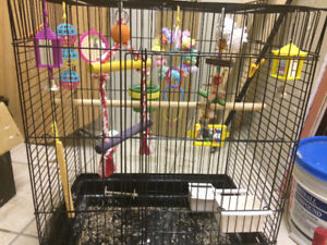 Bird cage with accessories REDUCED 50 dollars