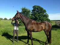 Wonderful Bay 17h Mare - **Free to Good Home**
