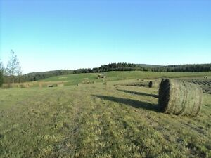Top Quality hay for sale