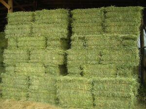 quality horse hay