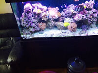 90 gallon saltwater coral reef tank