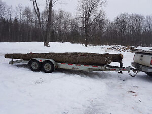 Big trees and logs wanted