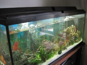 55 GAL TANK FULLY LOADED/LOTS OF EXTRAS