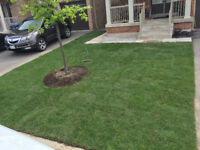 WANT NEW GRASS? Get It Done FAST! GTA West SODDING/LANDSCAPING!