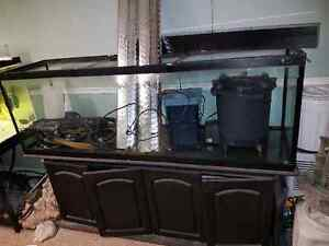 135 Gallon Aquarium