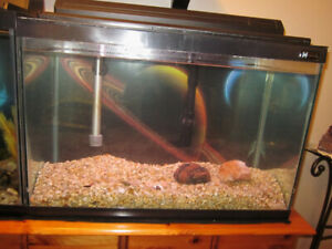 20 Gallon Aquarium For Sale
