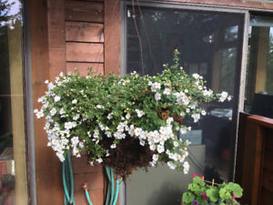 Succulents, rhododendrons, jasmine, hanging baskets, rosemary