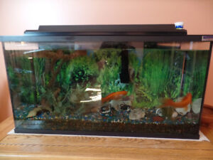 Aquarium 33 gallons