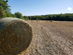 2019 4x5 Barley and Oat Straw for Sale