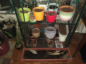 Plants, 25 Pots, Green House and Grow Lamp!