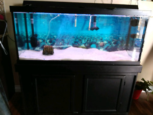 75 gallons fish tank with stand and heater