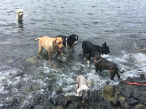 Tony's Tails: Dog Training and Walking Services