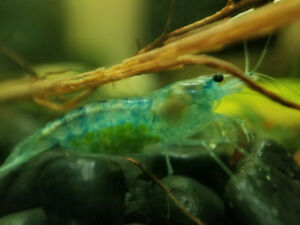 Fresh water fish, shrimp, snails, plants, live food and more!