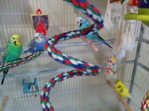 Looking for a budgie lover..