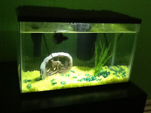 5 gallon fish tank with extras