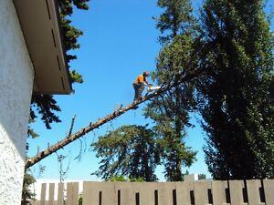 TREE SERVICE  REMOVALS & PRUNING (780) 421-8282 Edmonton Edmonton Area image 5