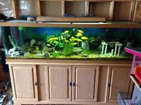 Fish tank, fish, and all accessories including cabinet