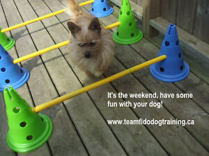 DOG TRAINING - OBEDIENCE, FLYBALL, FUN DOG, BEHAVIOR CONSULTS Peterborough Peterborough Area image 10